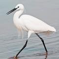 болотная птица 5 букв - фото 6